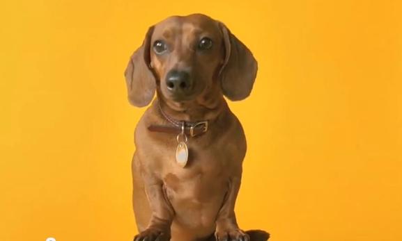 Pedigree Dog Food Commercial